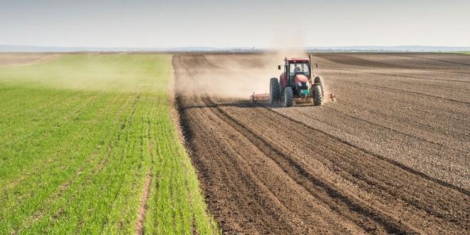 Agriculture dans le désert: Almata Production invente l'espoir à Gao