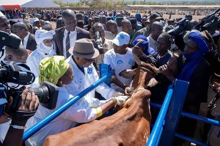 CAMPAGNE DE VACCINATION 2019/2020 DU CHEPTEL: La première dose de vaccin inoculée par Ibrahim Boubacar Keita, Président de la République