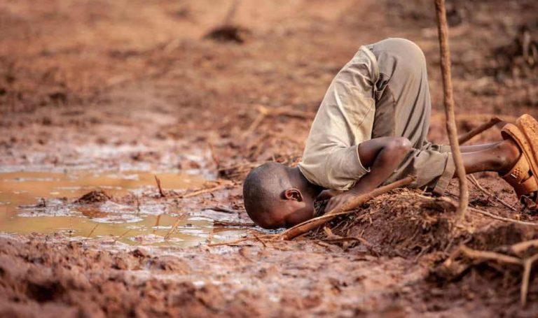 CHANGEMENT CLIMATIQUE: La protection de nos forêts aux spéculateurs fonciers s'impose