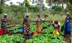 Bureau régional de la FAO pour l'Afrique: l'initiative «Main dans la Main» (MdM), une grande opportunité pour le Mali